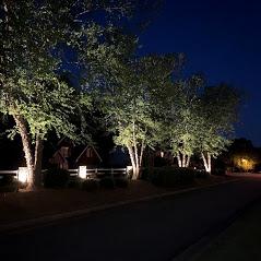 HOA entrance tree lighting